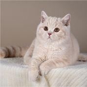 cat1-1